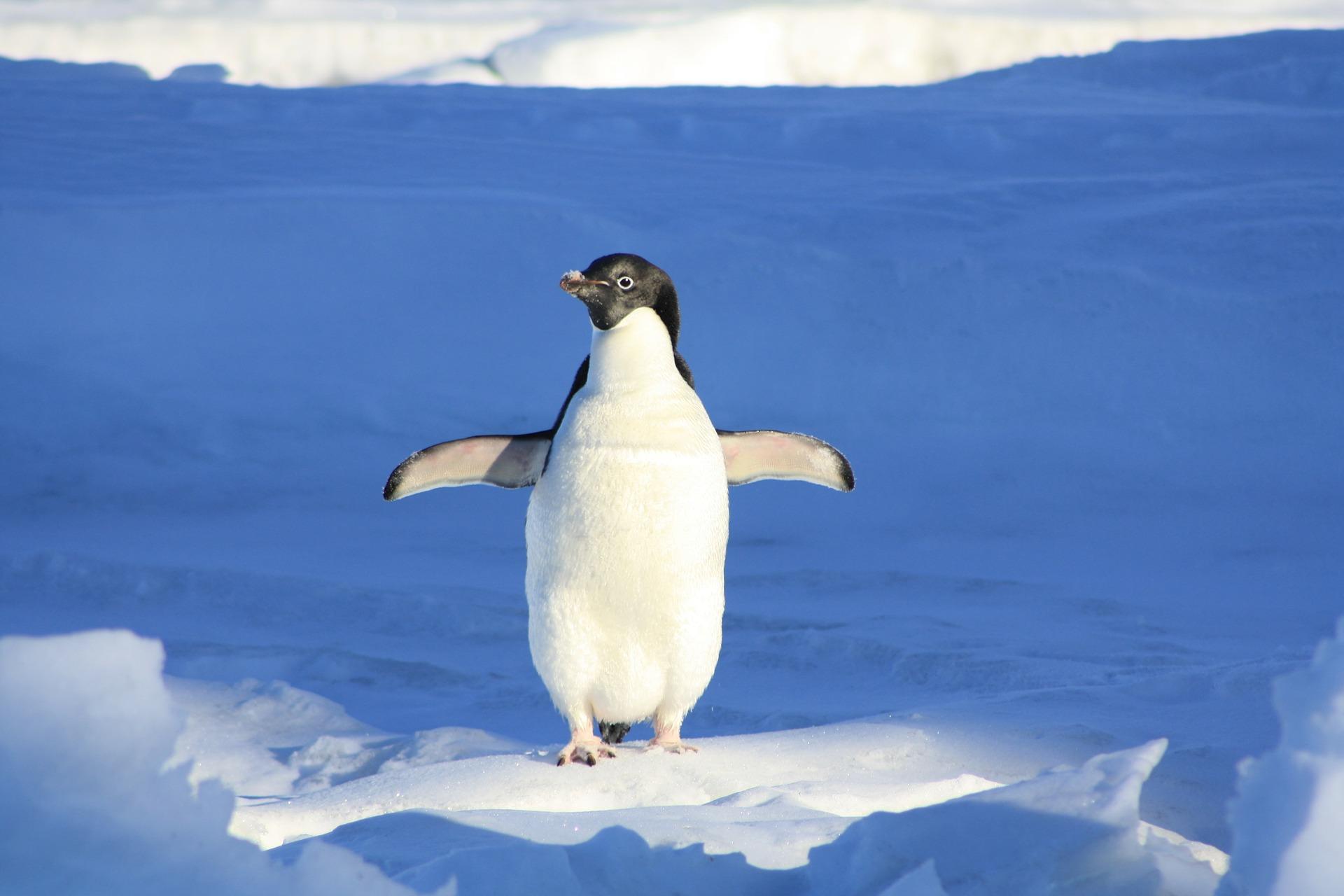 Nouvel algorithme Google : le moteur de recherche passe en mode Penguin